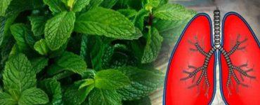 9-plante-care-curata-plamanii